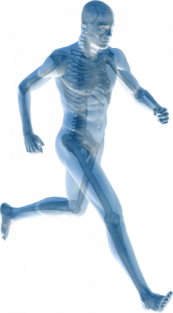 body map - Home Physio Group